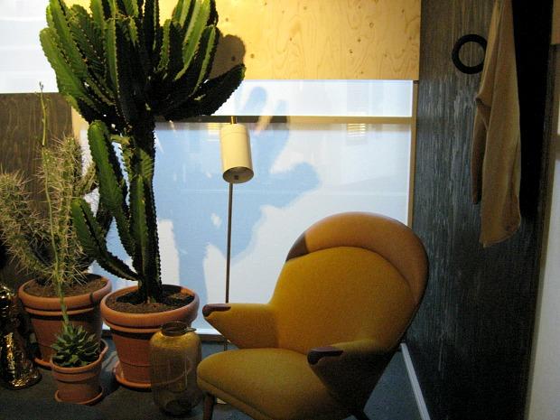 eh&i-cactussen