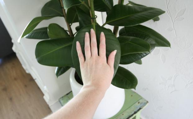hand-blad