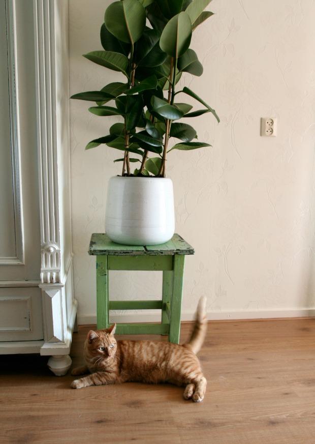 pip-plant