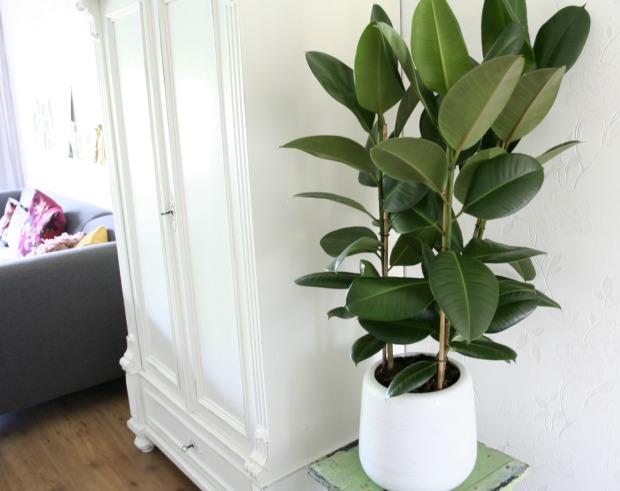 Grote Plant Slaapkamer : Missie grote plant: geslaagd
