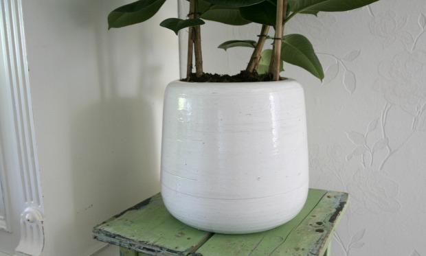 Missie grote plant: geslaagd