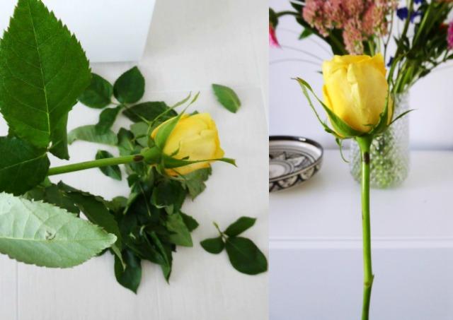 blad-verwijderen-roos