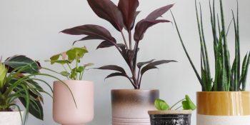 Plantenstandaards uit eigen huis, omhoog met je planten!